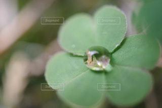 近くの花のアップの写真・画像素材[1159346]