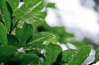 近くの葉のアップの写真・画像素材[1159352]