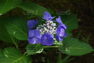 クローズ アップ庭園の緑の植物のの写真・画像素材[1198440]