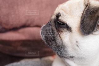 近くにカメラを見て犬のアップの写真・画像素材[1213168]