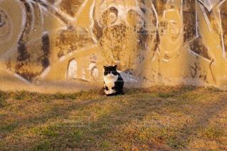 汚れフィールドの上に座っている猫の写真・画像素材[1259741]