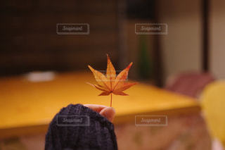 自然の写真・画像素材[1612490]
