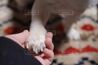 私と愛犬の写真・画像素材[2075061]