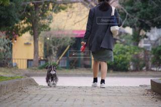 犬,公園,屋外,後ろ姿,散歩,夕方,女,女子,女の子,人物,背中,外,人,後姿,ミニチュアシュナウザー,後