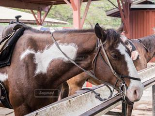 クアロア牧場の写真・画像素材[500438]