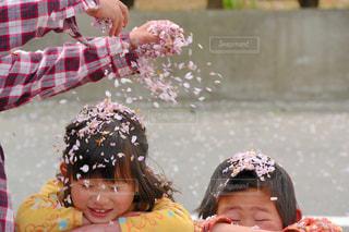 桜の写真・画像素材[645018]