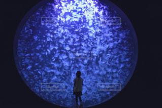 水族館の写真・画像素材[703010]