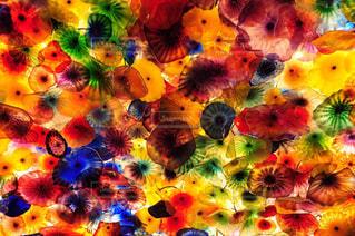 花のようにカラフルな蝶の写真・画像素材[785817]