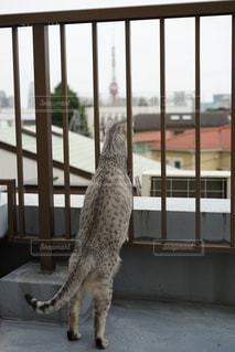 ウィンドウの前に立っている猫 - No.786103