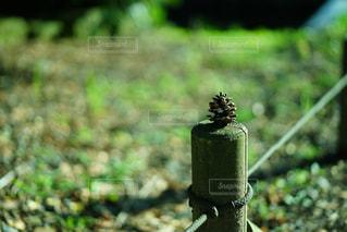 草の消火栓の写真・画像素材[786110]