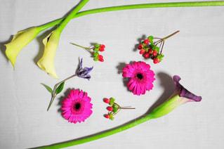 近くの花のアップ - No.786125
