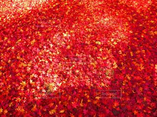 近くの花のアップの写真・画像素材[843807]