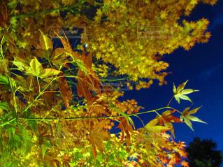 近くの木のアップの写真・画像素材[843819]