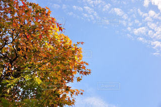 近くの木のアップの写真・画像素材[845784]