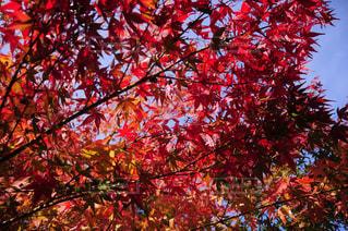 近くの木のアップの写真・画像素材[845787]