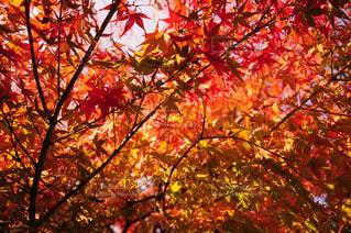 近くの木のアップの写真・画像素材[845791]