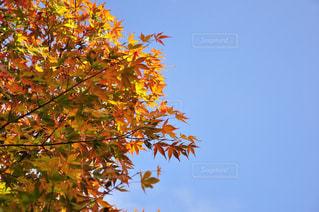 近くの木のアップ - No.845793