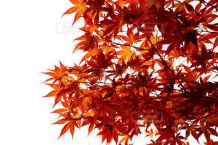 木の花の花瓶の写真・画像素材[845809]