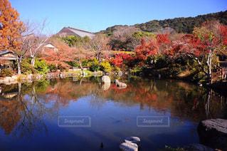 木々 に囲まれた川の写真・画像素材[906128]