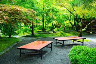 庭のベンチの写真・画像素材[906195]