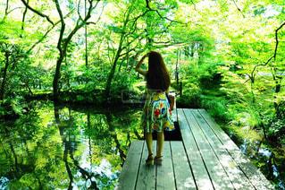 森の横にある木製ベンチの写真・画像素材[906201]