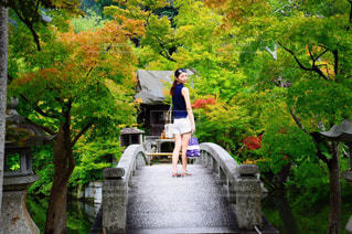 夏,橋,京都,緑,観光,庭園,永観堂