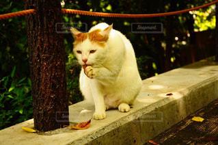 ベンチに座ってオレンジと白猫の写真・画像素材[906212]