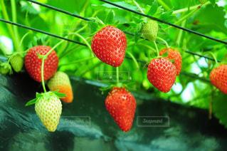 果物の一部の写真・画像素材[910201]