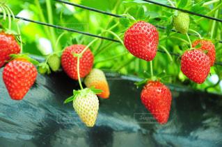 果物の一部 - No.910204