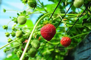 果物や野菜のグループの写真・画像素材[910219]