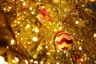 夜ライトアップされたクリスマス ツリー - No.914681
