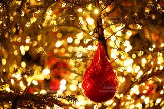 夜ライトアップされたクリスマス ツリー - No.964525