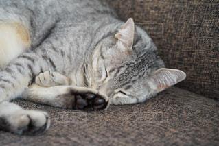 近くの地面に横になっている猫 - No.981108