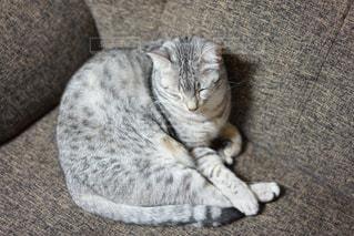 ソファーに横になっている猫 - No.981113