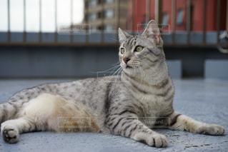 建物の前に横になっている猫 - No.981119