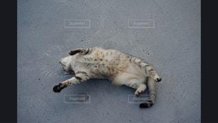 地面に横になっている猫の写真・画像素材[981146]