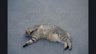 地面に横になっている猫 - No.981147