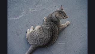 ドアの前に立っている猫 - No.981148