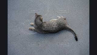 地面に横になっている猫 - No.981149