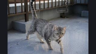 建物の前に立っている猫 - No.981151