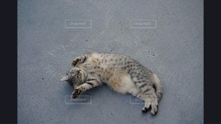 地面に横になっている猫 - No.981154