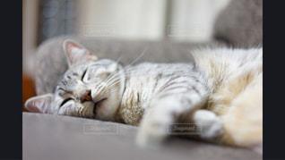 地面に横になっている猫 - No.981155