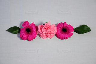 ピンクの花 - No.1042653