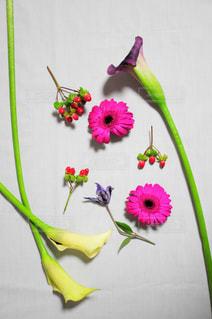 近くの花のアップ - No.1043557