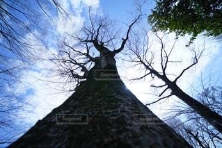 近くの木のアップ - No.1101411