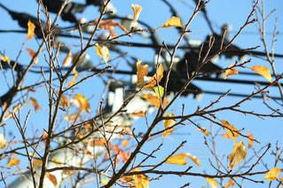 黄色の鳥が木の枝に止まってください。の写真・画像素材[849140]