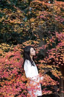 モデル,秋,紅葉,樹木,被写体
