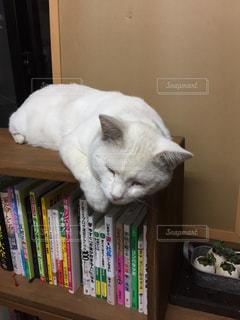猫の写真・画像素材[239919]