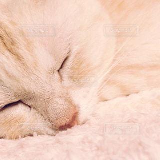 猫の写真・画像素材[239203]