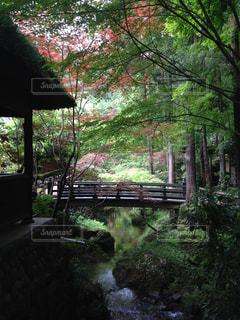 自然の写真・画像素材[244605]